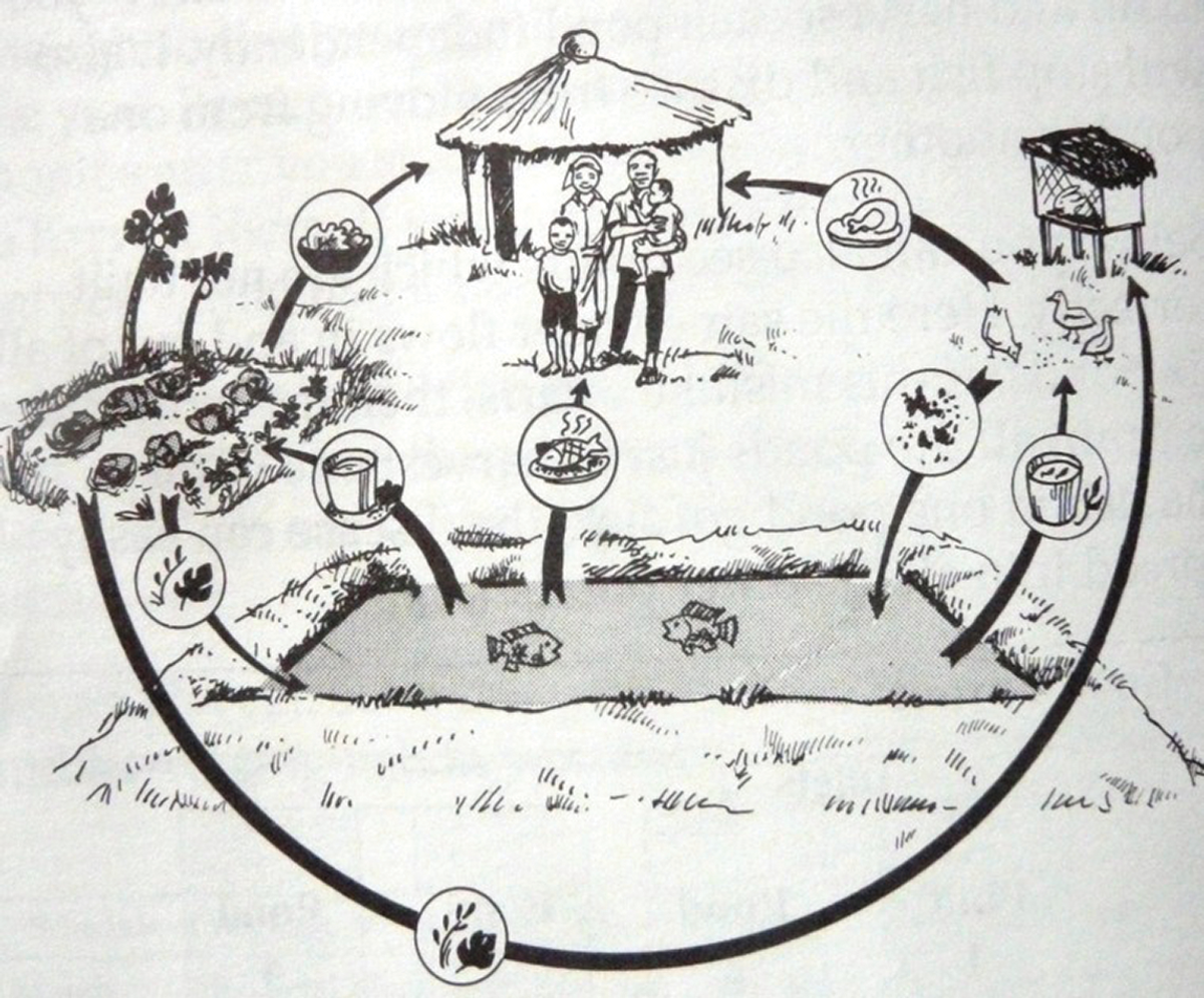 TN64 figure 11